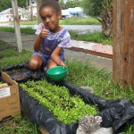 Picking Baby Greens, Saving Creatures, and Perfecting the 'Sneaky Scoop' at Our City Homestead