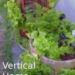 Steps We've Taken So Far to Establish Our Urban Organic Micro Farm in Jacksonville, Florida