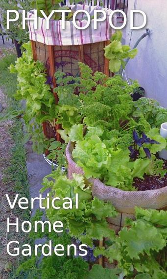 Phytopod, Steps We've Taken So Far to Establish Our Urban Organic Micro Farm in Florida
