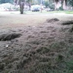 Cut Grass - A Free Neighborhood Resource