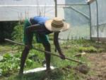 Weeding and More Weeding in an Alabama Garden